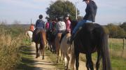 Visuel équitation